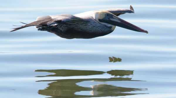 Pelican coming in for a landing - Ground Effect