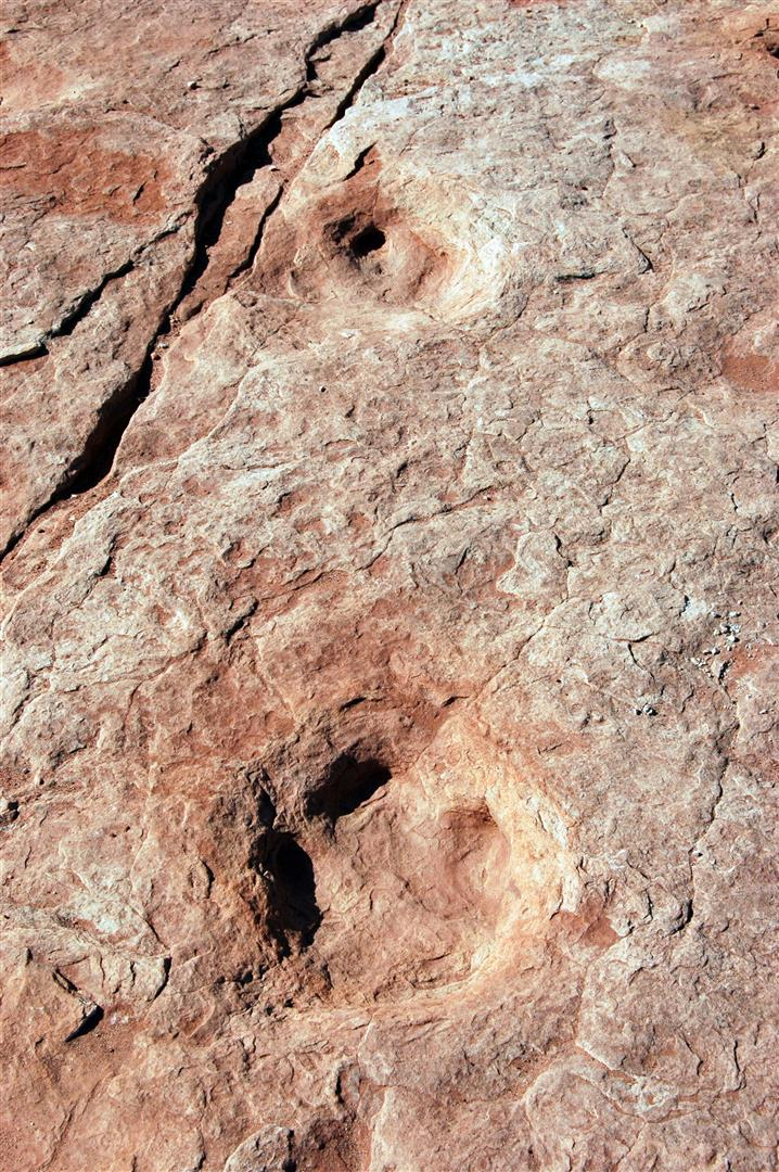 Dinosaur tracks - Sorrel River Ranch