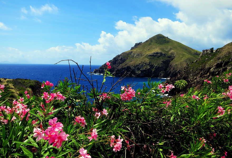 Saba Flowers - Saba and the Juancho E Yrausquin Airport