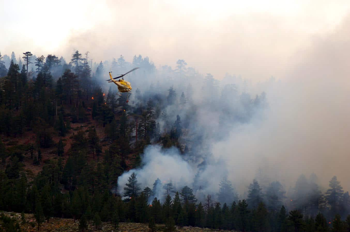 A helicopter flies in to fight a forest fire.