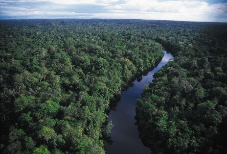 A river in the Amazon jungle, which Juliane Koepcke floated and swam in.