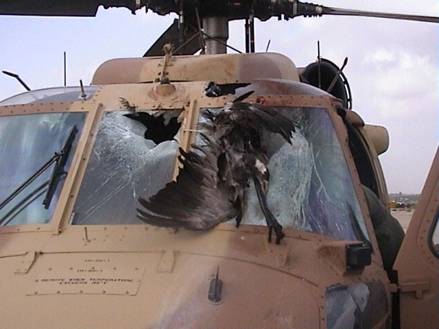 A Sikorsky UH-60 Blackhawk after a bird strike